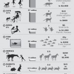 Top 10 Pets Infographic