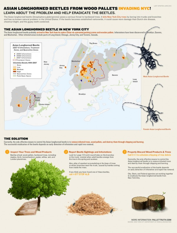 asian longhorned beetle infographic