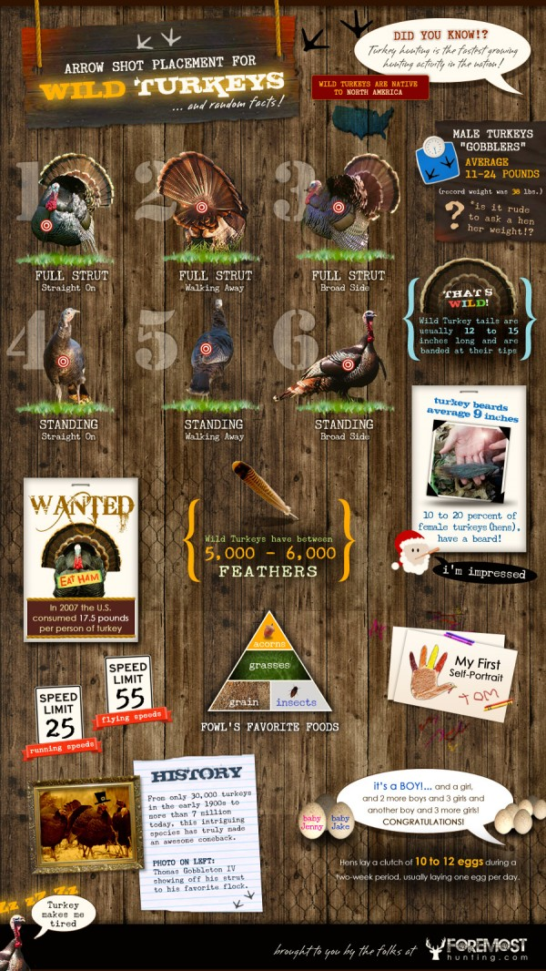 Wild-Turkey-Hunting-Facts