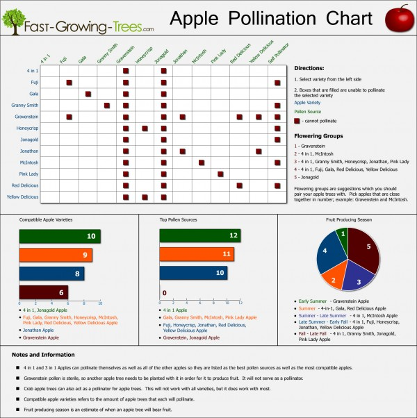 Apple pollination chart infographic infographics showcase