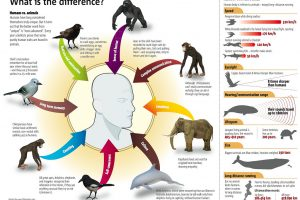 Animals & Humans: What's the Difference
