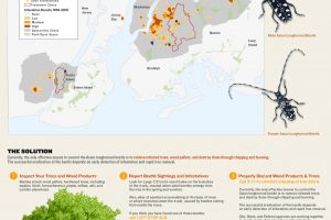 Asian Longhorned Beetle Killing New York City Trees (Infographic)