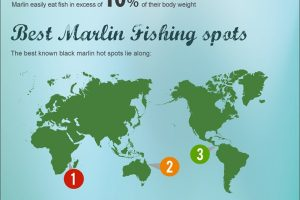 Big Game Fishing Infographic