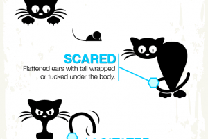 Understand Your Cat's Body Language