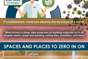Buying A New Home? Here's How to Check for Mold Before It's Too Late.